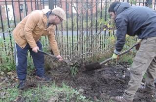 shrubmove2